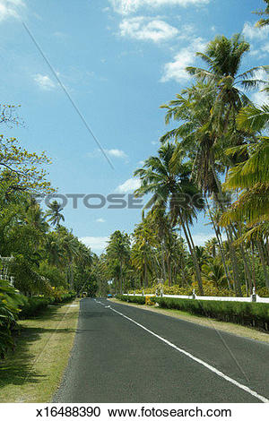 Stock Photography of French Polynesia, Moorea, Palm trees along a.