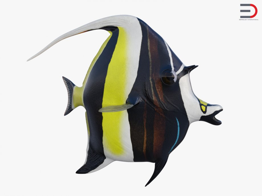 Moorish Idol Fish 3d model.