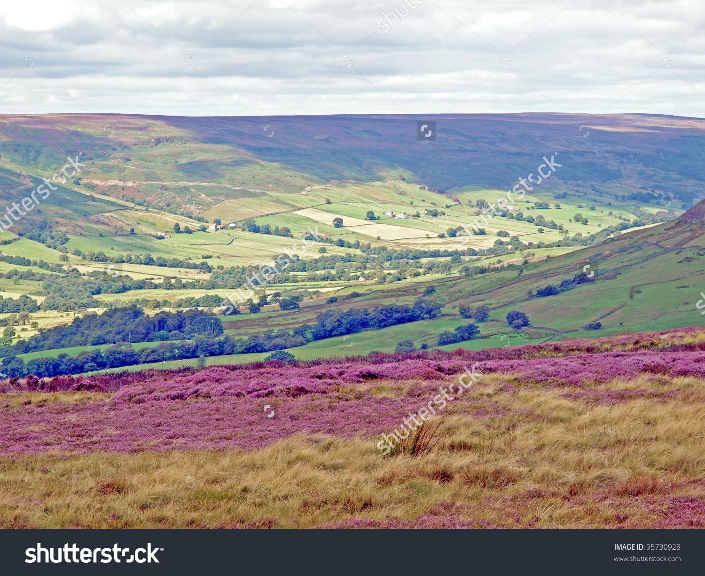 Heather Bloom On Moor Above Farndale Stock Photo 95730928.