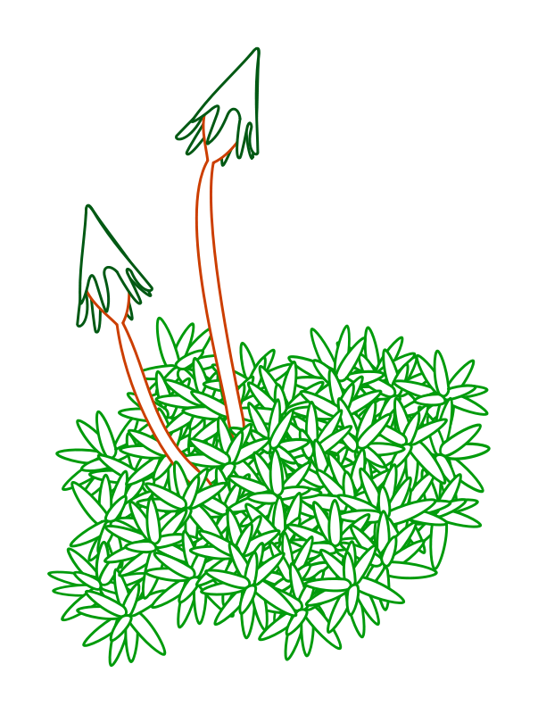 Free Clipart: Moss.