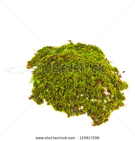 "moss Isolated"" Stock Photos, Royalty."