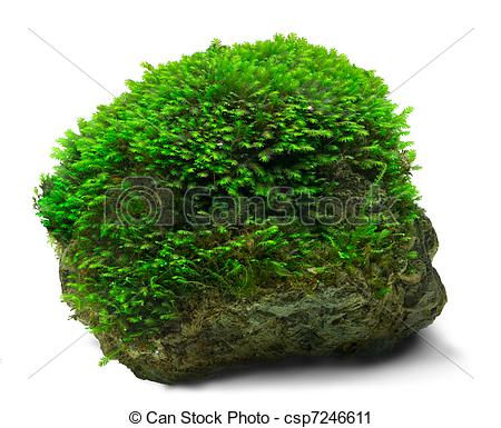 Moss clipart.