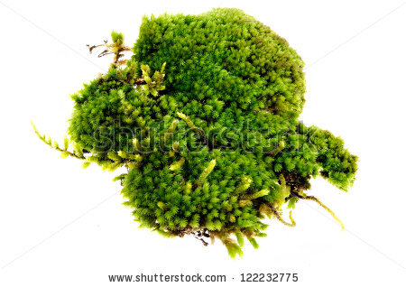 Moss Isolated Stock Photos, Royalty.