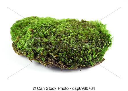 Stock Foto von grün, Moos.