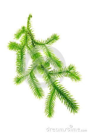 Moss Clip Art.