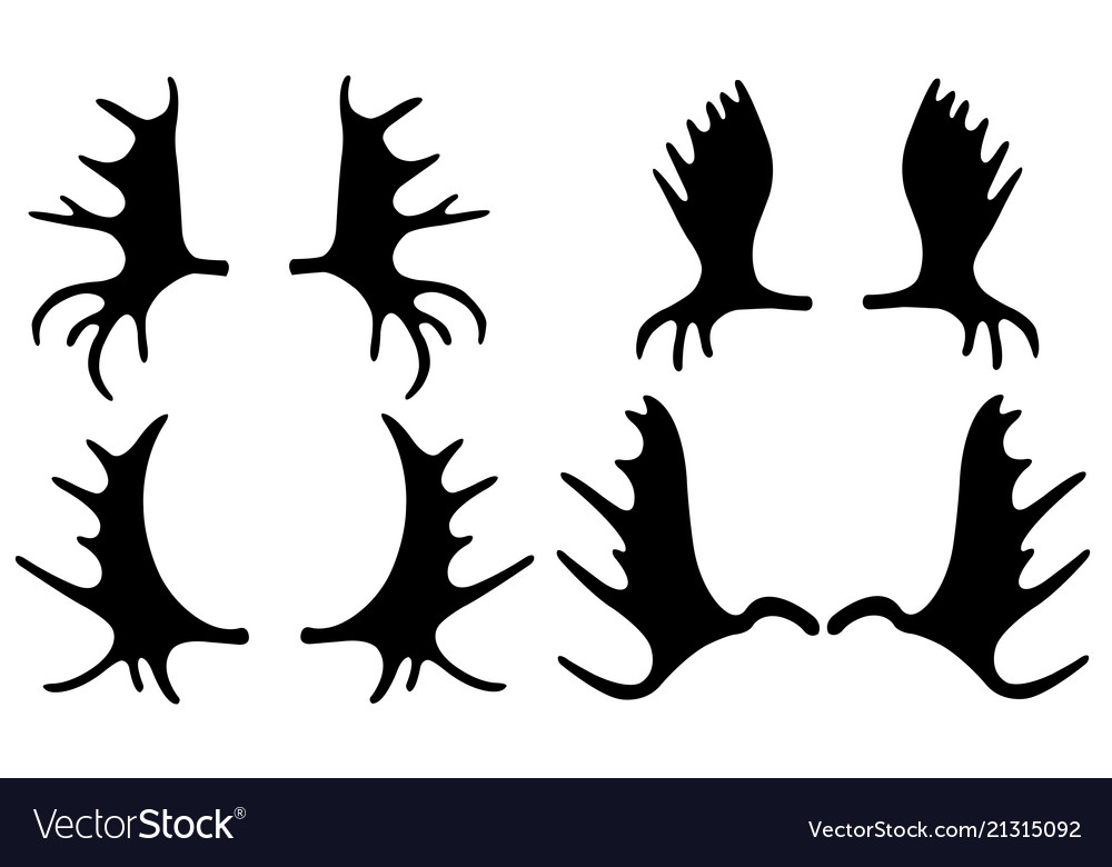 Set of different moose antlers.