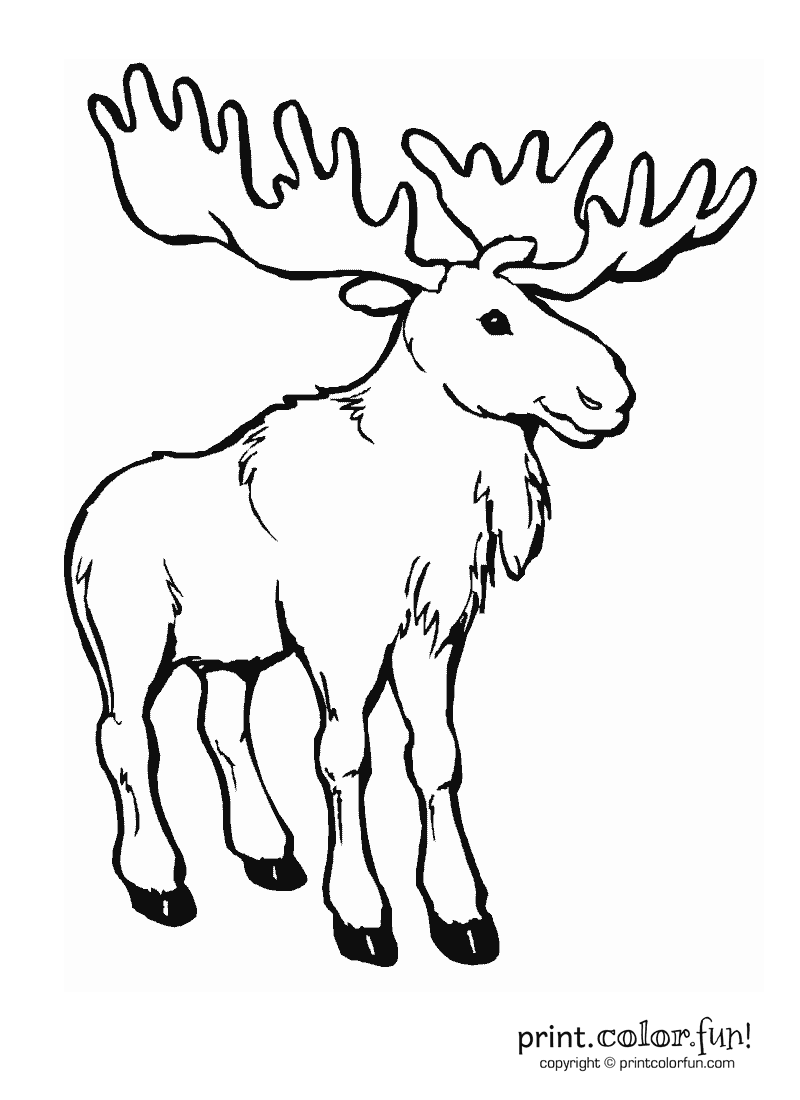 Cute Moose Clipart Black And White.