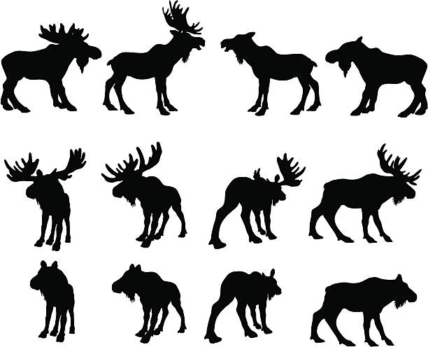 Cow Moose Clip Art, Vector Images & Illustrations.