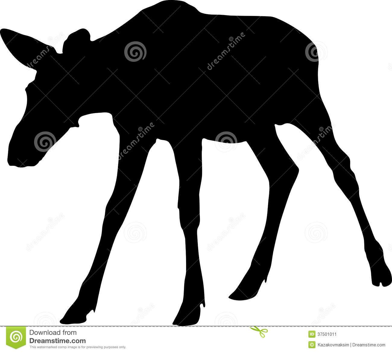 Silhouette Of Moose Calf Stock Image.