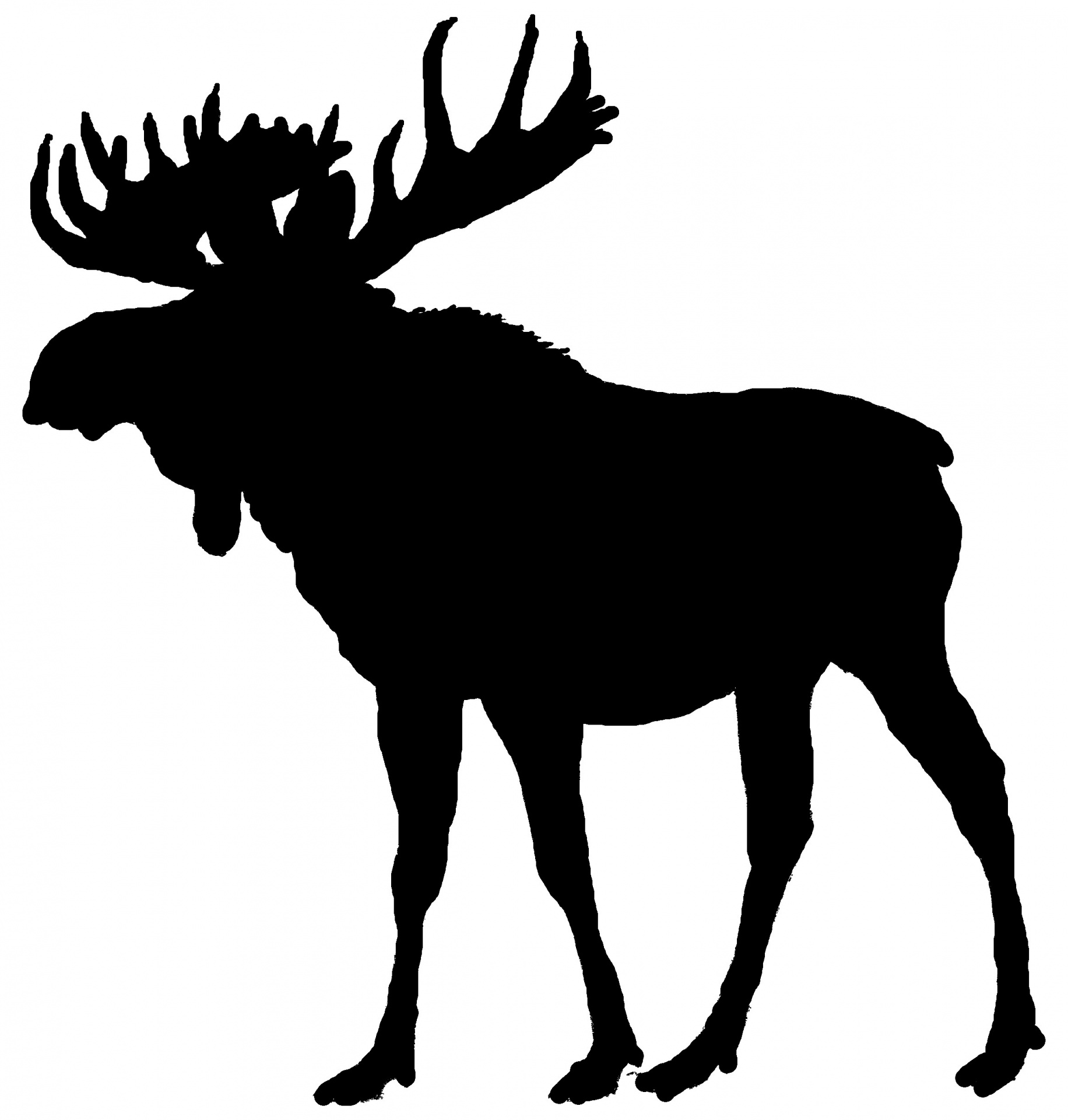 Moose clipart moose outline, Moose moose outline Transparent.