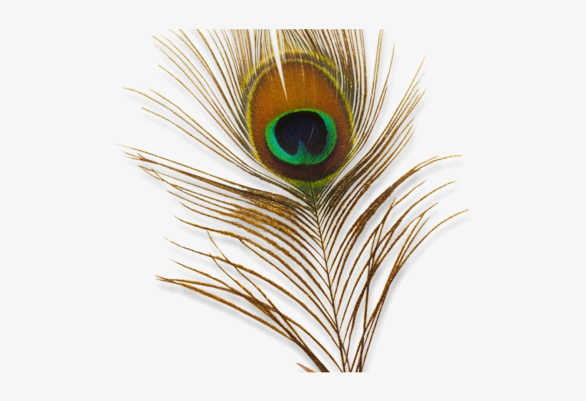 Peacock Feather Png Transparent Images.