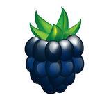 Ripe Blackberry Over White Stock Illustrations.