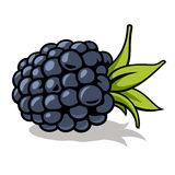 Set Of Outline Hand Drawn Berries ( Blackberry, Cherry, Strawber.