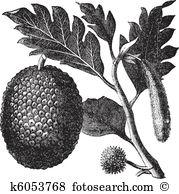 Moraceae Clipart Vector Graphics. 24 moraceae EPS clip art vector.