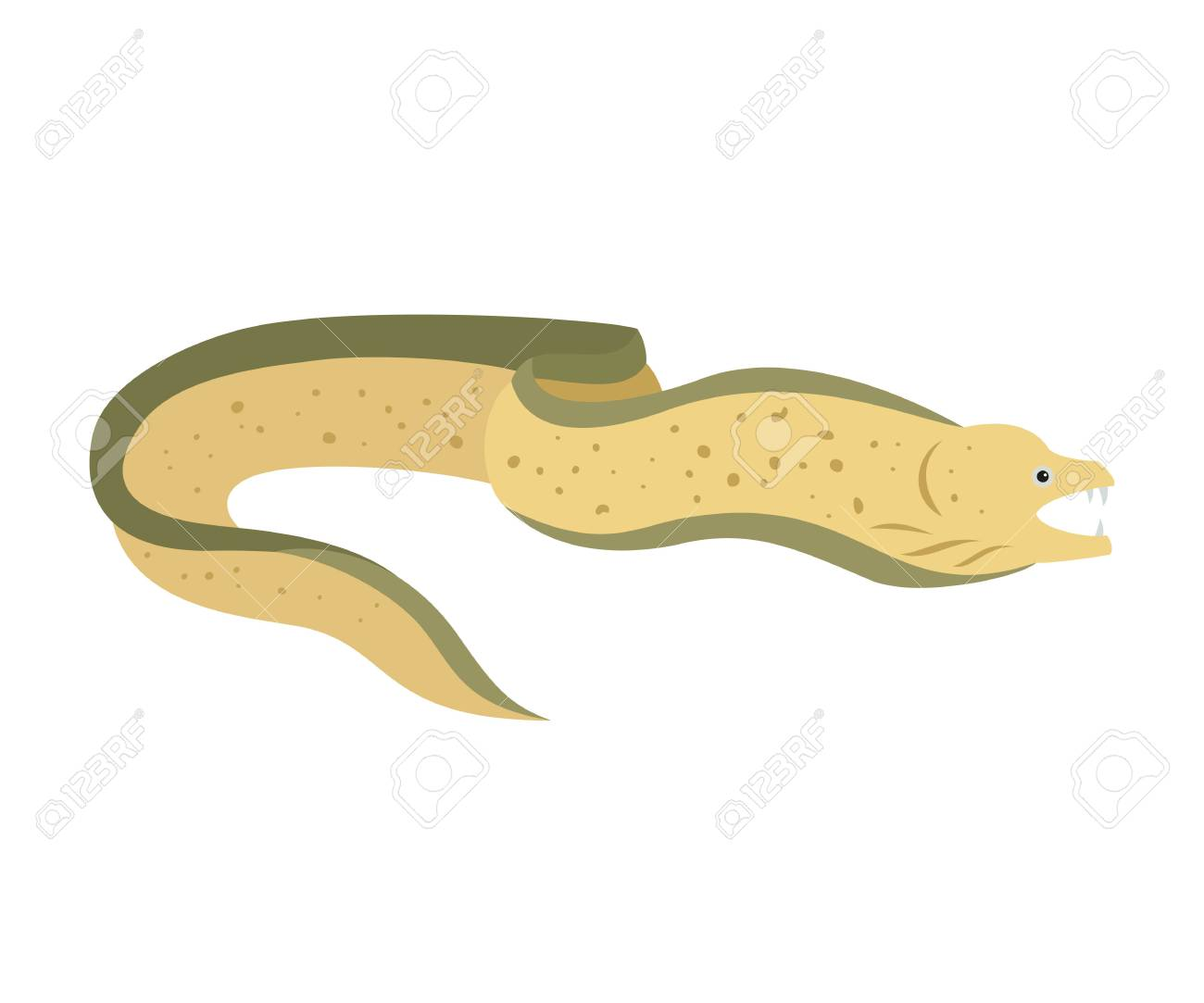 Moray eel on white background. Vector illustration..