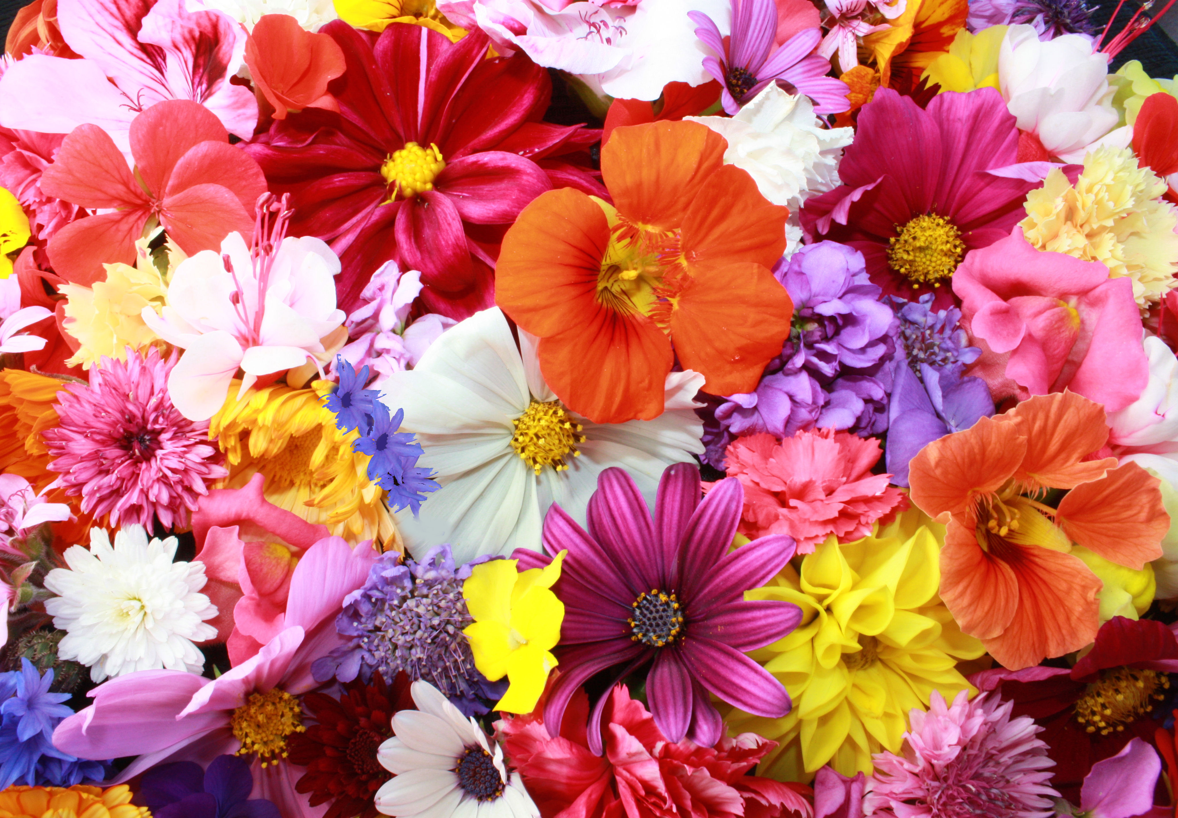 Flowers and Their Meanings in Dreams.
