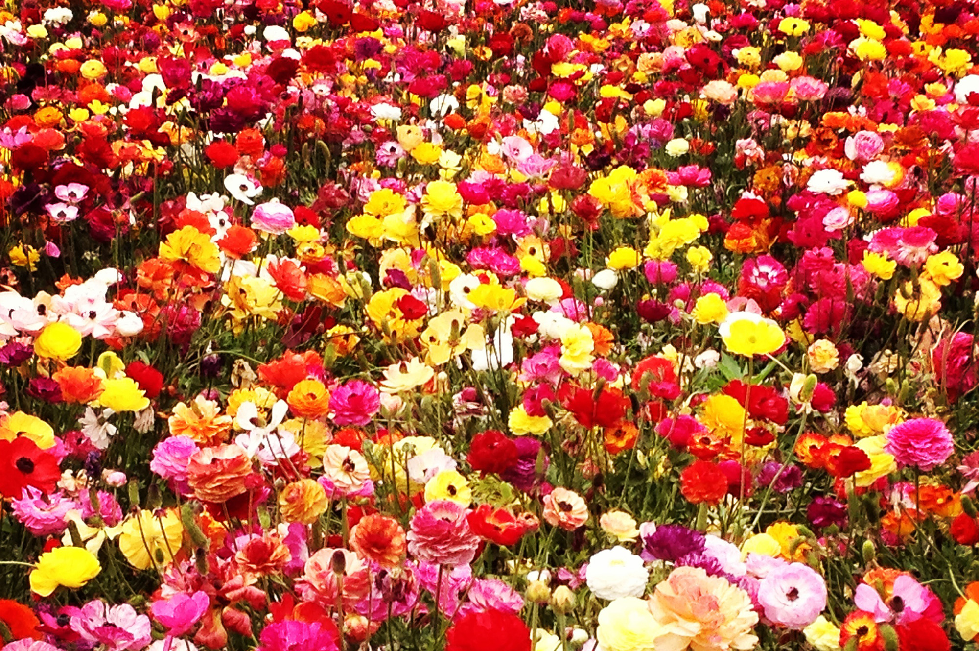 Flowers in a lot of colors and species.