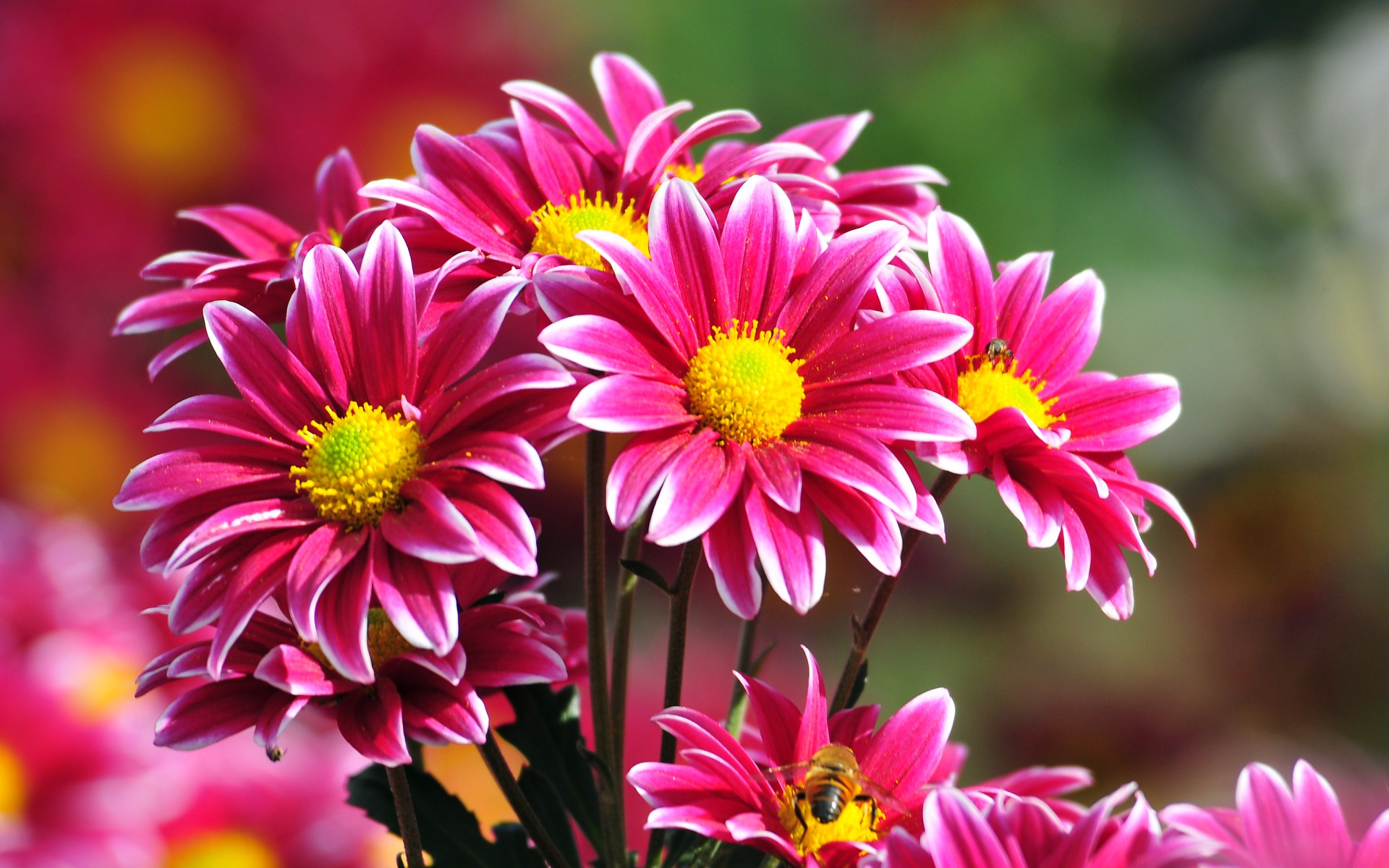 Quality Images of flowers Wallpapers, Wallpapers.