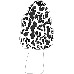 Morel clipart, cliparts of Morel free download (wmf, eps, emf, svg.