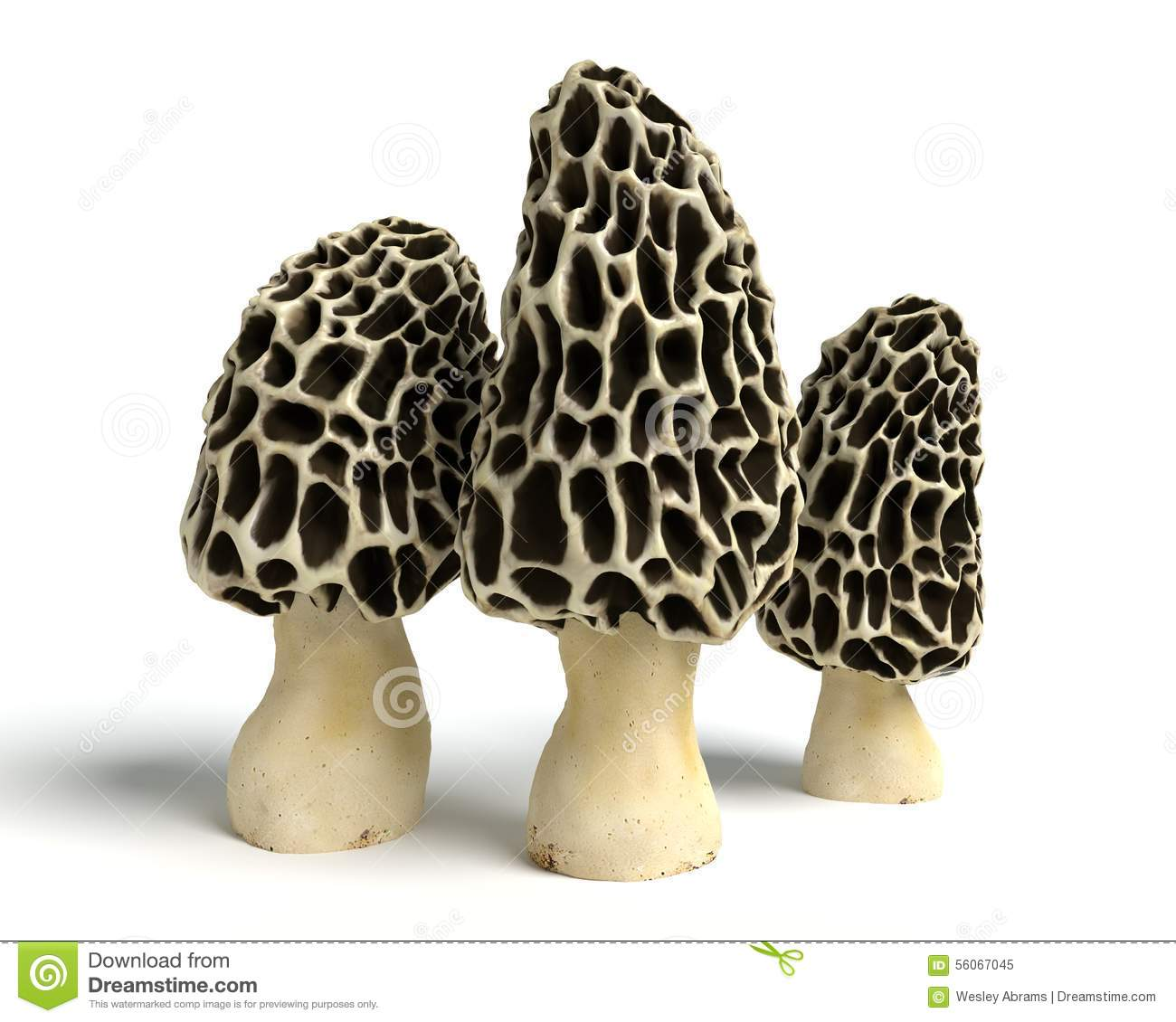 Morel Mushrooms Stock Illustration.