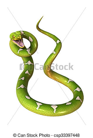 Drawing of Green Tree Python on White.