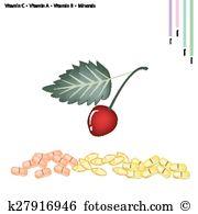 Morello cherry Clipart and Illustration. 13 morello cherry clip.
