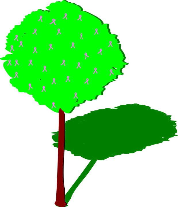Free vector graphic: Tree, Shadow, Trunk, Green.