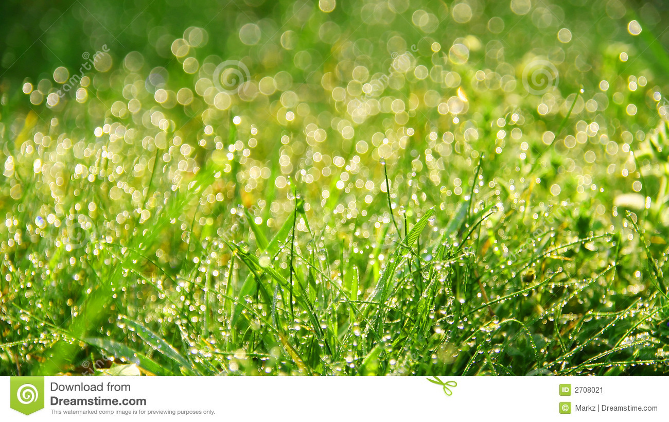 Dew on grass clipart.