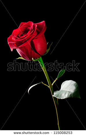 Love red roses hd images free stock photos download (11,363 Free.