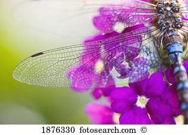 Geflügeltes insekt Stock Fotos und Bilder 57.695 geflügeltes.