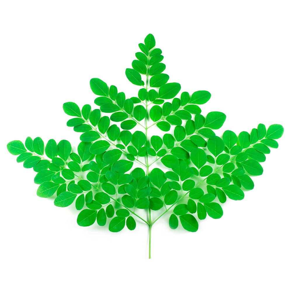 Moringa Leaf Infusion.