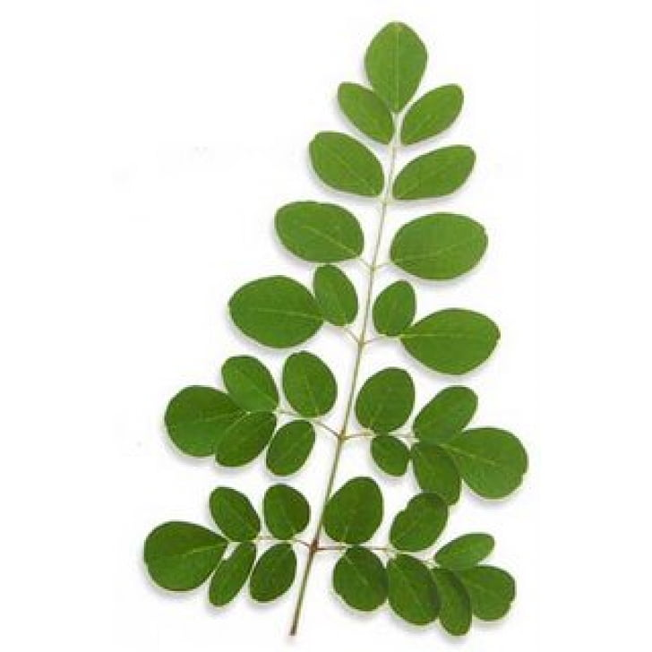 Dietary supplement Drumstick tree Leaf Nutrition Plant.