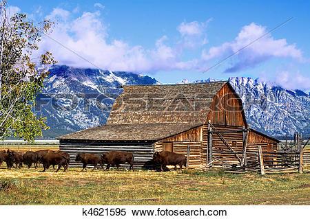 Stock Image of Mormon Row Barn in the Grand Tetons k4621595.