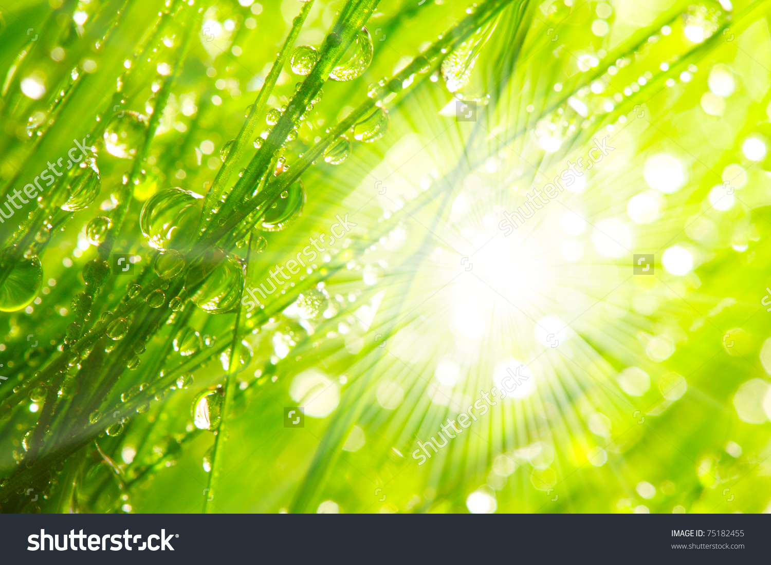 Fresh Morning Dew On Spring Grass Stock Illustration 75182455.