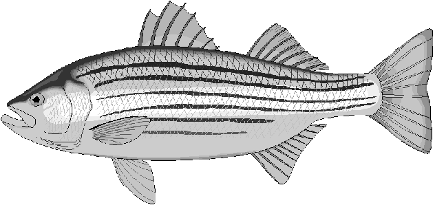Free Fish Coloring Pages Clipart, 1 page of Public Domain Clip Art.