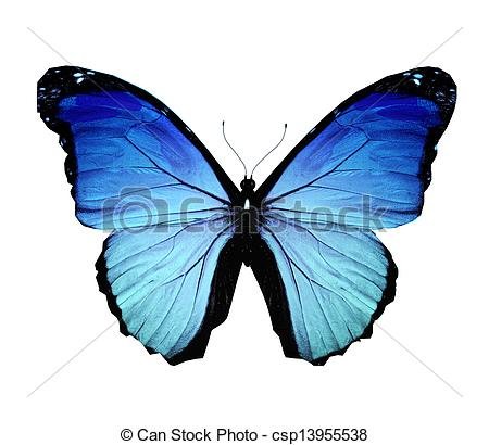 Morpho Clipart and Stock Illustrations. 2,860 Morpho vector EPS.