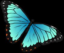 Rainforest butterfly clipart.