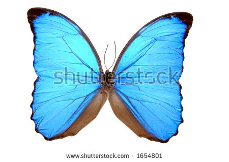 Butterfly Clip Art Species Blue Morpho Stock Vector 215103049.