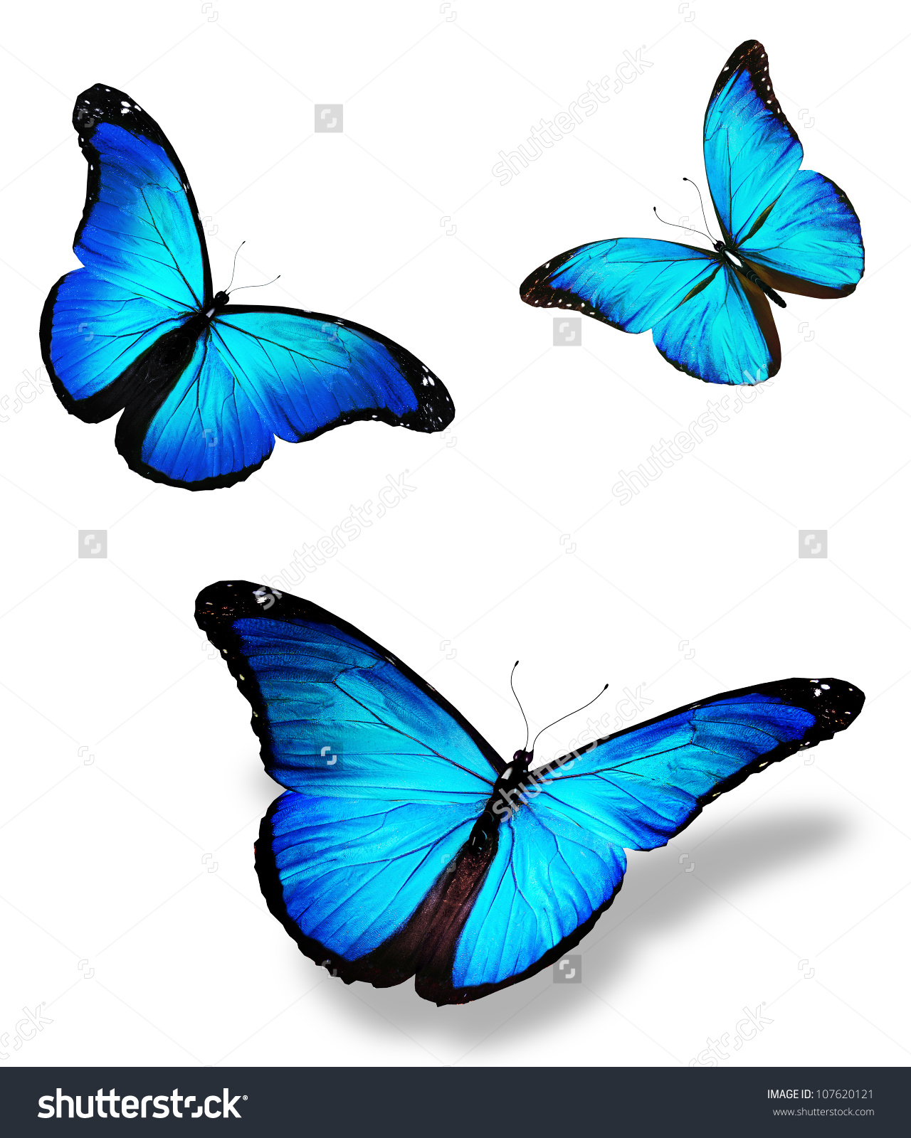 Three Blue Butterfly Morpho Isolated On Stock Illustration.