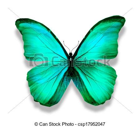 Drawing of Morpho blue turquoise butterfly , isolated on white.