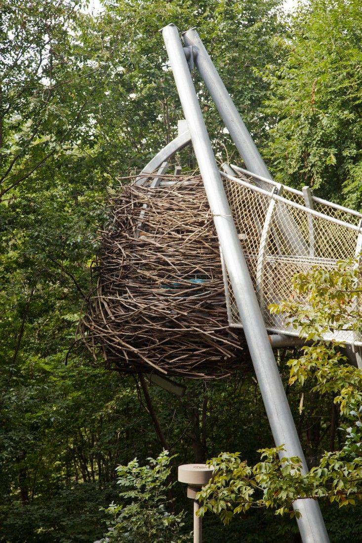 Morris Arboretum's Tree Adventure exhibit Out on a Limb, designed.