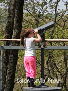 Morris Arboretum Tree Adventure.