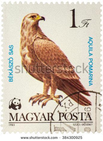 Rare Eagle Stock Photos, Royalty.