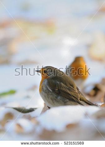 Songbird In Snow Stock Photos, Royalty.