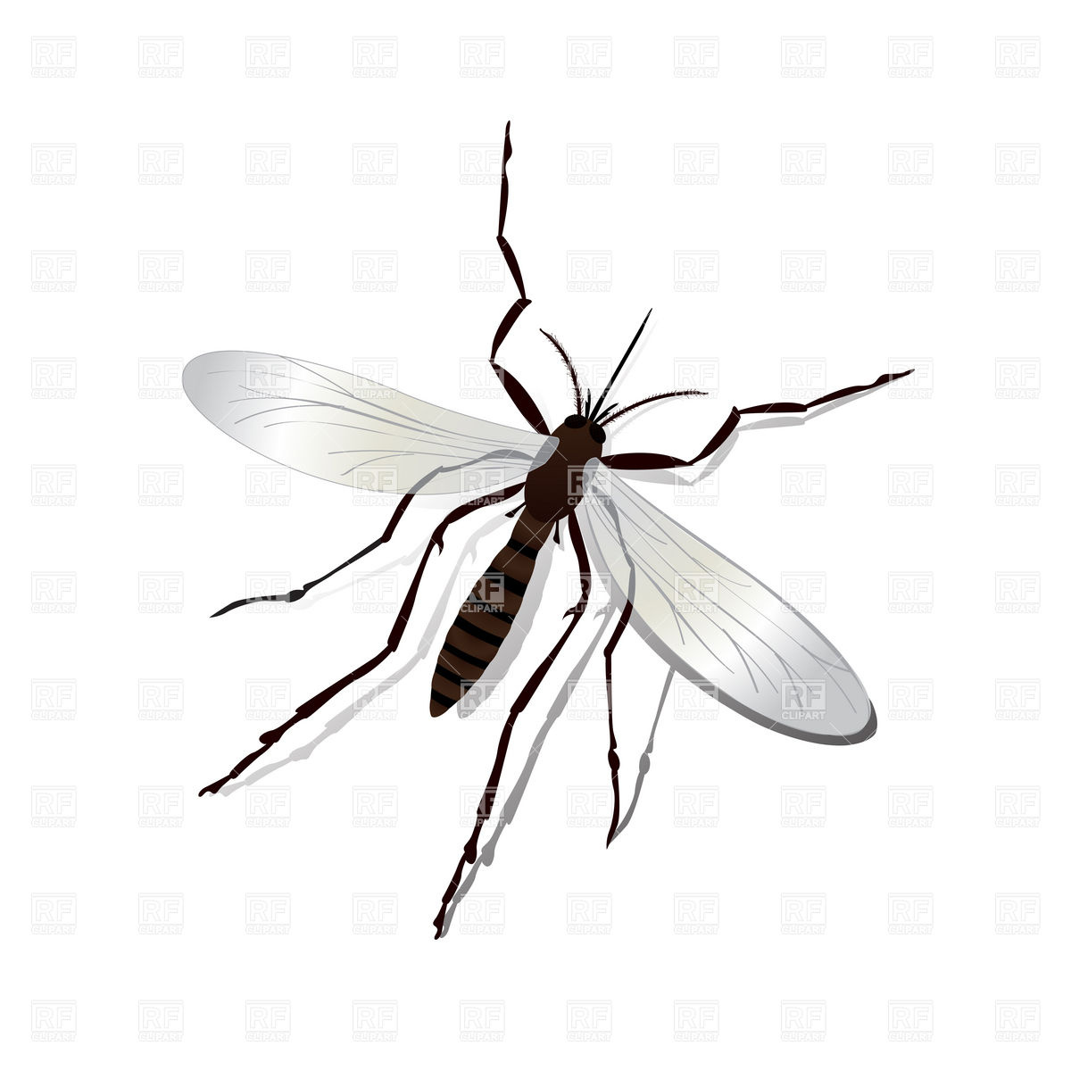 Mosquito Clipart.