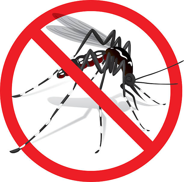 Best Mosquito Illustrations, Royalty.