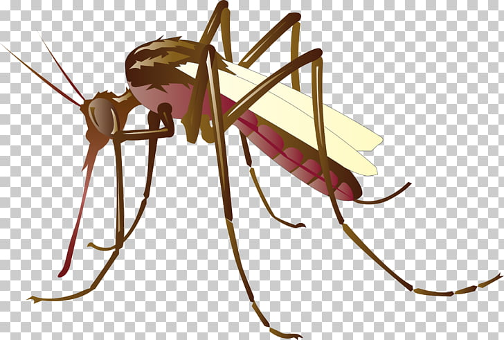 Mosquito control , mosquitoes, brown mosquito illustration.