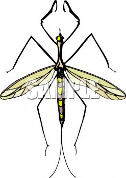 Royalty Free Clipart Image: Mosquito Hawk or Crane Fly.
