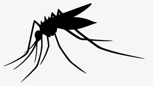 Mosquito, HD Png Download , Transparent Png Image.