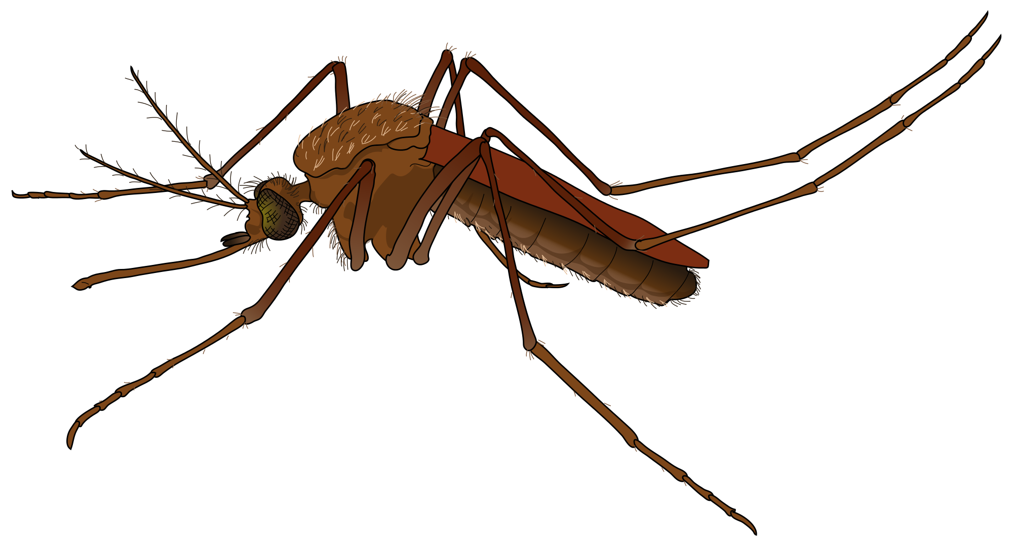 Mosquito PNG images free download.